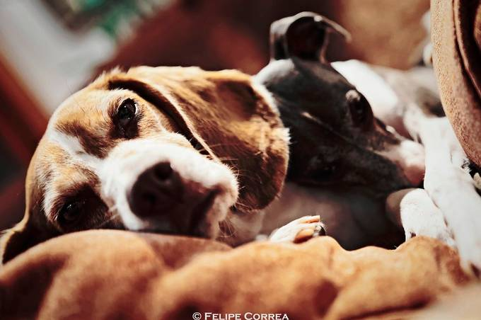 Slumber before Christmas by felipecorrea - Social Exposure Photo Contest Vol 20