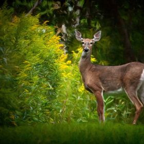 Captured this image on a back road near my cabin last summer. Photographed from my truck down a mowed path.
