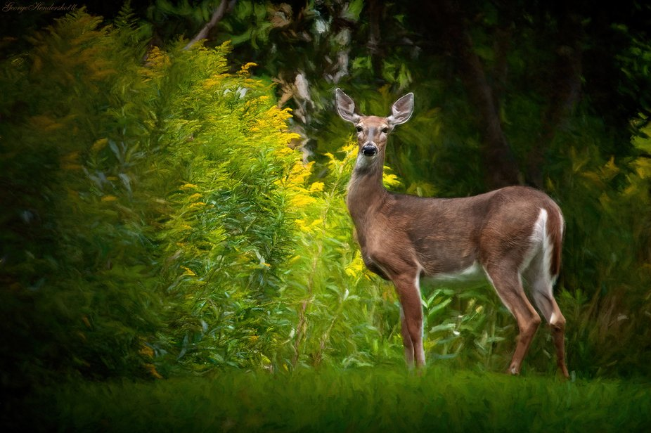 Captured this image on a back road near my cabin last summer. Photographed from my truck down a m...