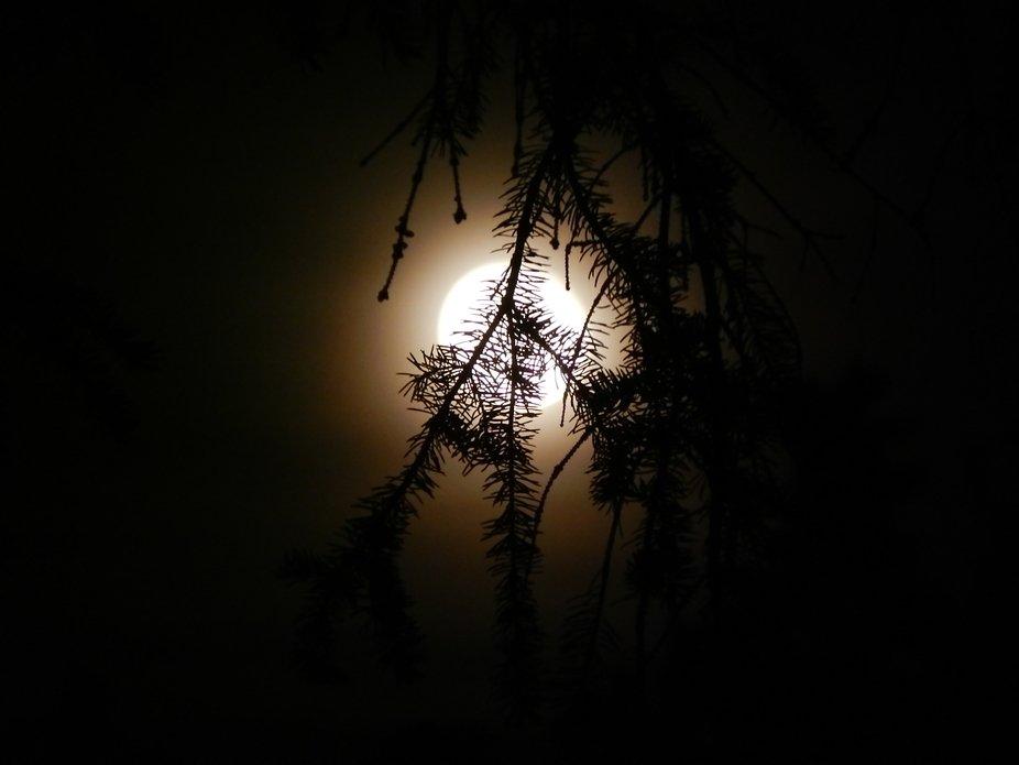 Moonwise...