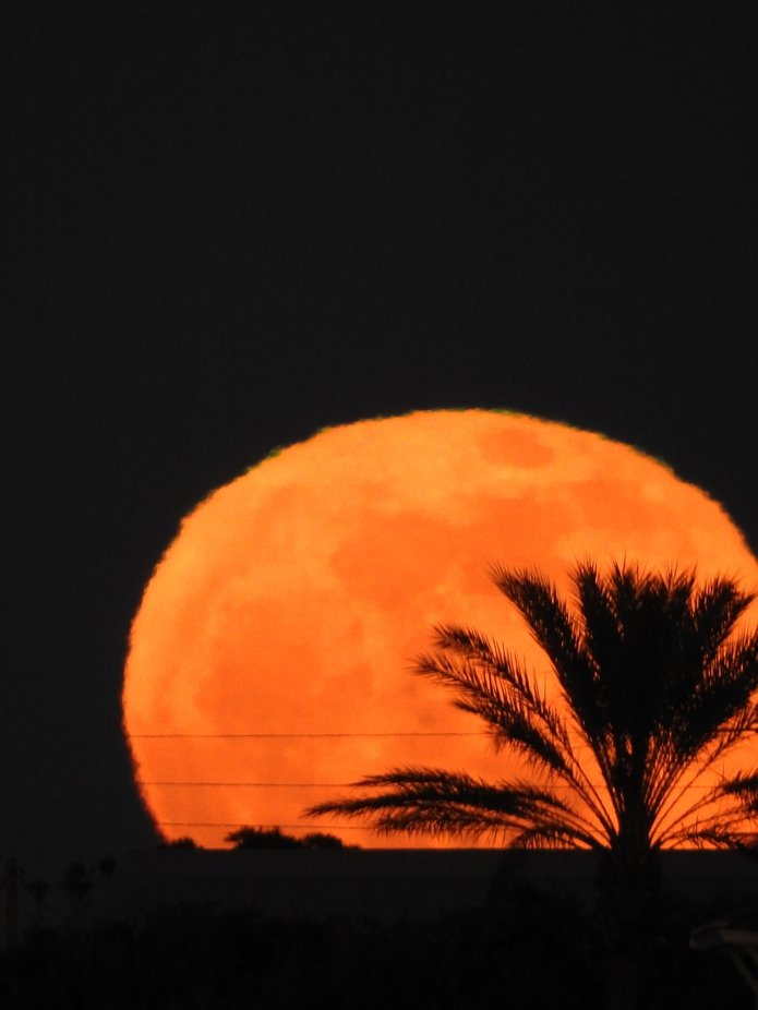 Moon Rise In The Palms. The area's around the moons surface are incredible! Mountainous surfaces very visible at this time.