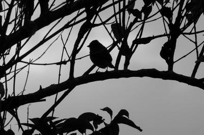 A contraluz el pájaro anuncia la proximidad del MOnte Roraima en Venezuela.