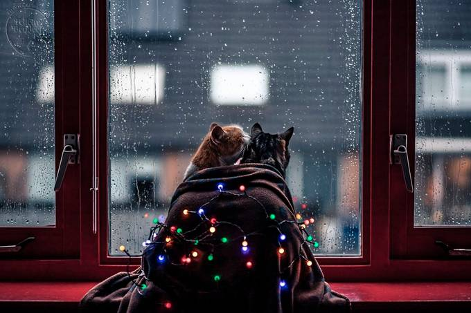 Happy Holidays by felicityberkleef - Holiday Lights Photo Contest 2018