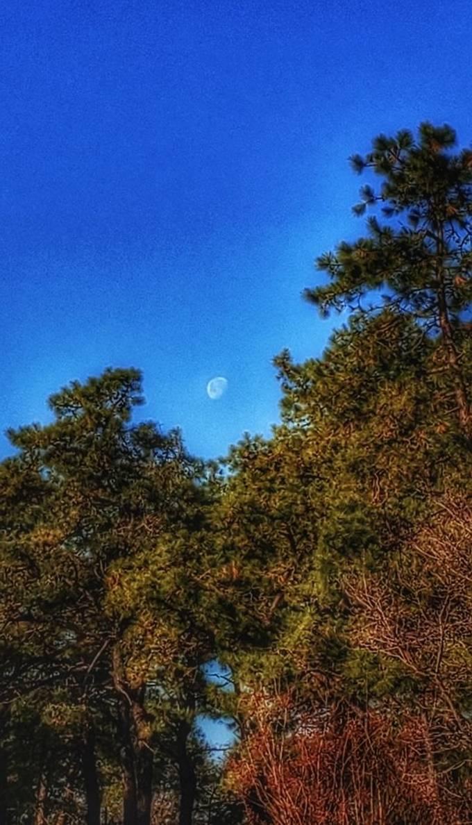 Daytime moon!