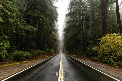 Red Wood Road