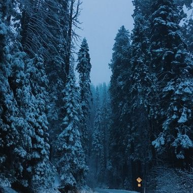 road through the sequoia forest in the winter snow