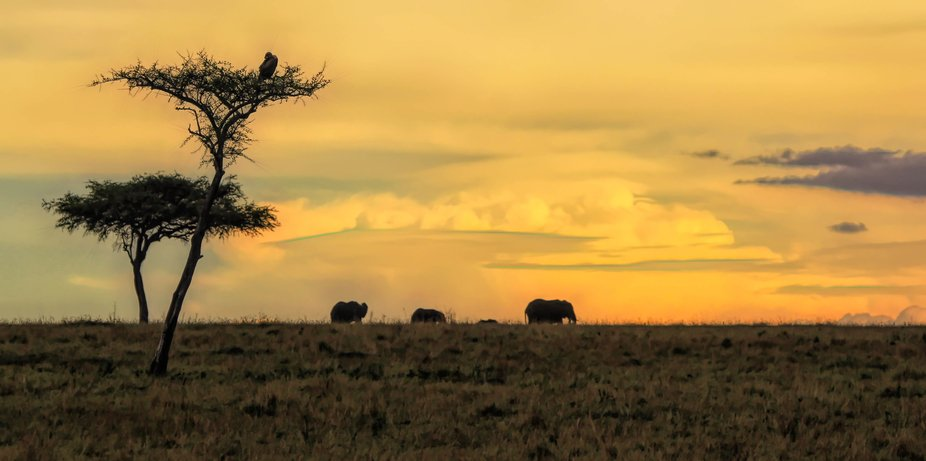 a moment in time out in the Mara while on safari