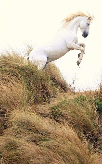 Horse in Dunes