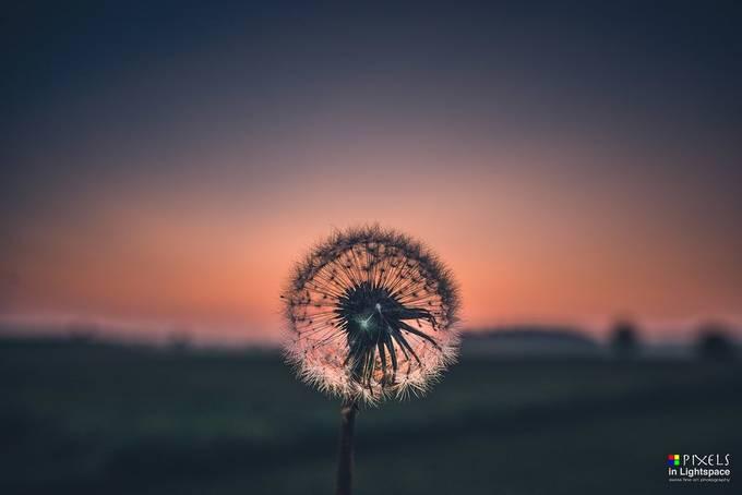 Autumn sunset by PixelsInLightspace - Colorful Macro Photo Contest