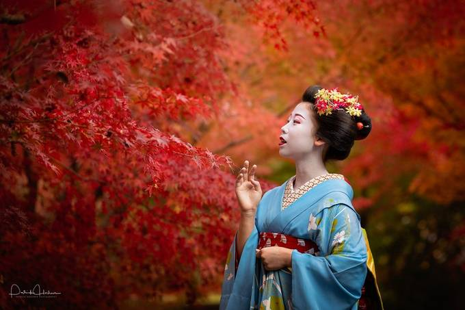 Fall foliage by Patosan - Monthly Pro Photo Contest Vol 48