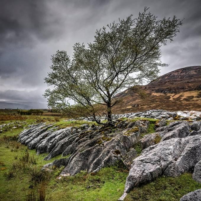 Taken on the road to Elgol, Isle of Skye, Scotland.