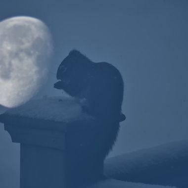 Moonlight overlay