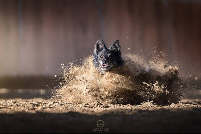Explosion by carlopierbattista - Dogs In Action Photo Contest