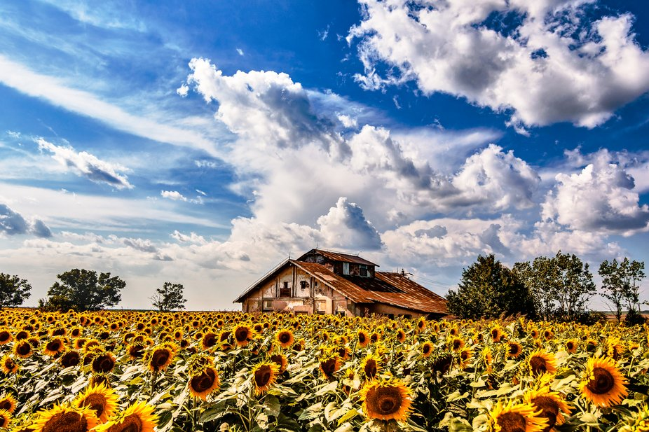 house in the sunflower