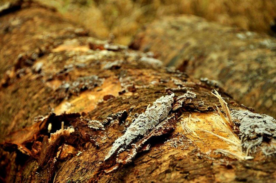 a log.