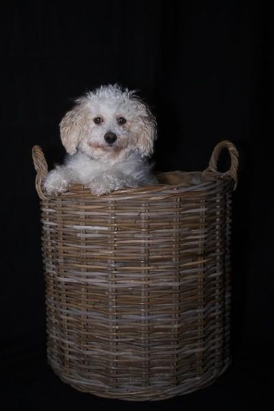 Honey in a basket