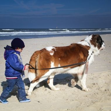 My grandson with my Saint Bernard, Hebbes