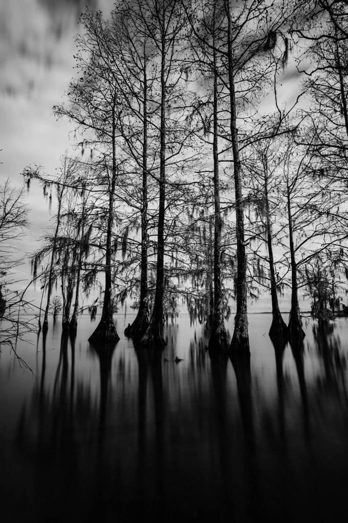Fred L Day Boat Ramp Lake Moultrie in Cross, South Carolina