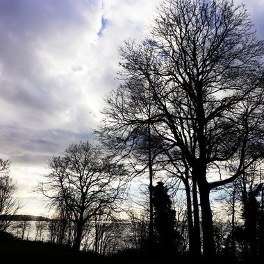 Bare trees against cloudy skies