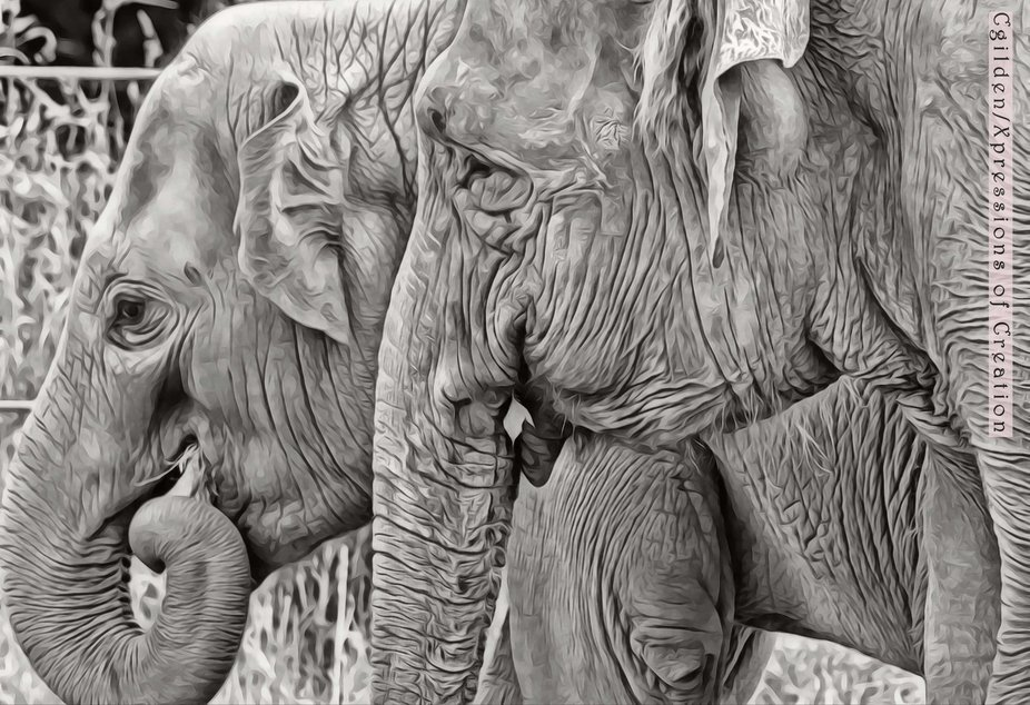 2 elephants hanging out.