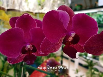 Fabulous orchids