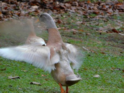 Flapping About
