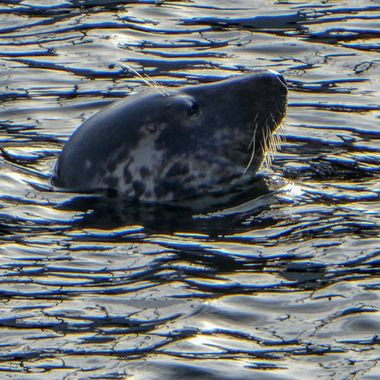 Burghead Harbour resident