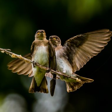 Oops!  I missed the branch... can I borrow your wing, OK?