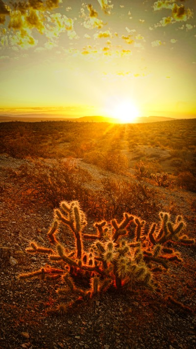 cholla sunrise.