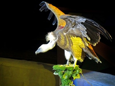The Vulture in the Circus, St. Petersburg.
