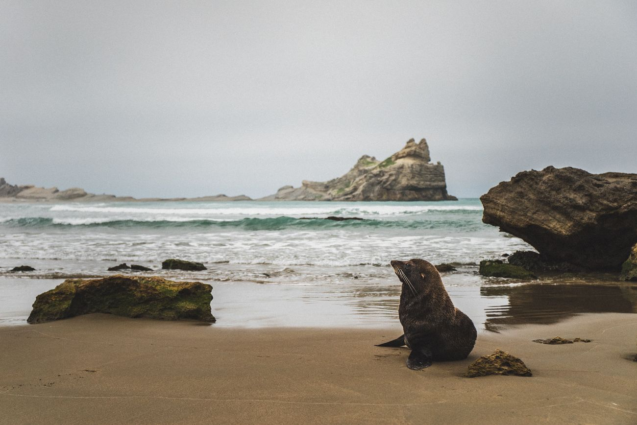 A stunning place to chill like this seal.