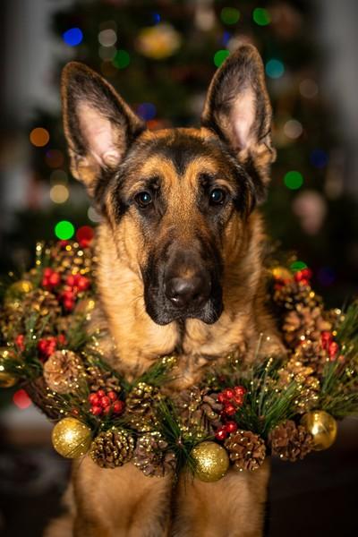 Nero Happy Holidays