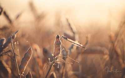 Harvest can be beautiful if you look a little closer ????????