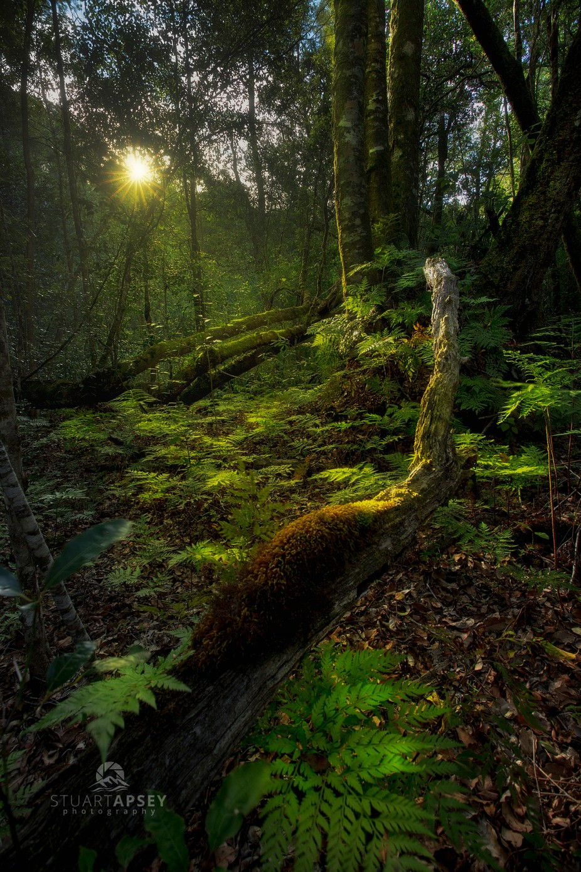 Forest glow by stuartapsey - Social Exposure Photo Contest Vol 20