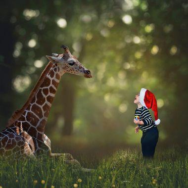 Look! A Giraffe