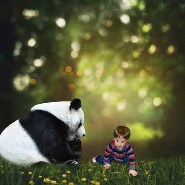 Playing with a Panda