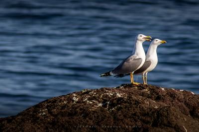 Spouses Seagull