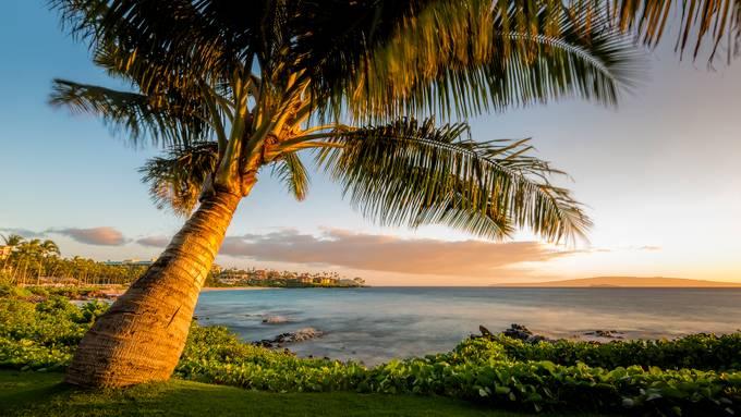 Hawaii Dreaming by jasonosborne - Palm Trees Beauty Photo Contest