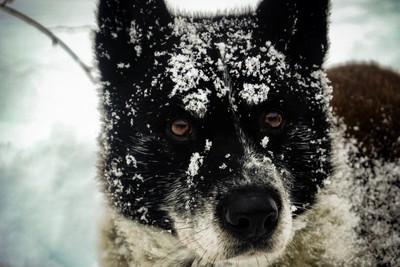 Prime loven the snow