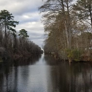 A different look of the dismal swamp