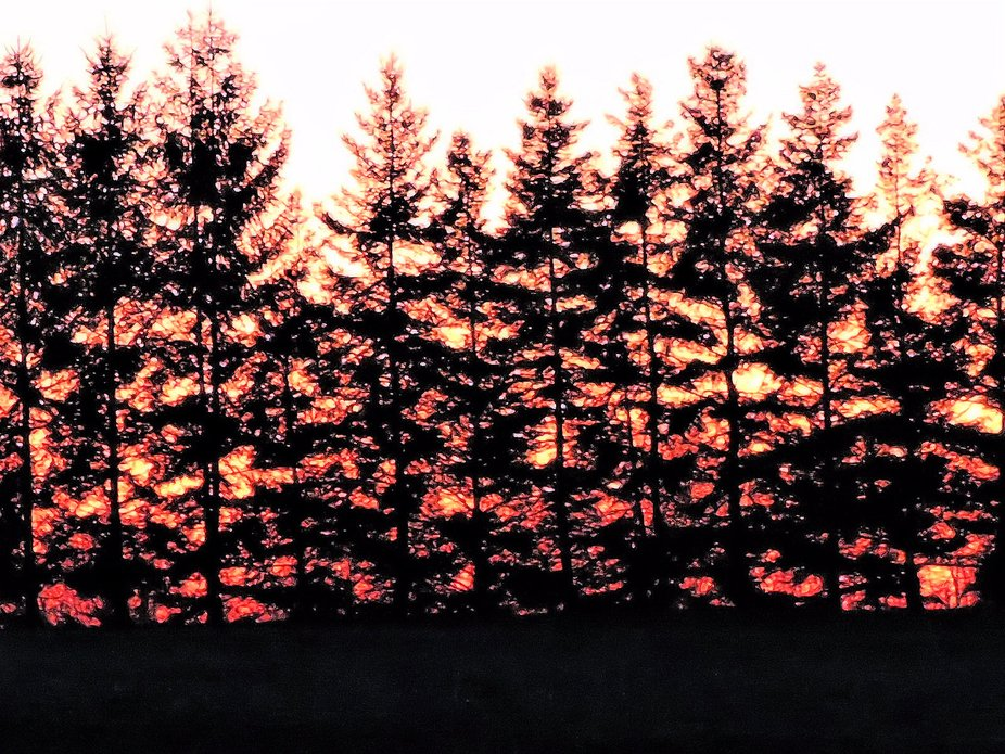Firey Silhouette