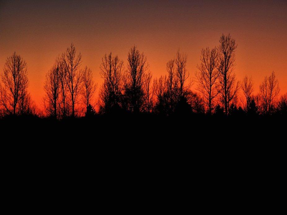 Silhouette Tree Line