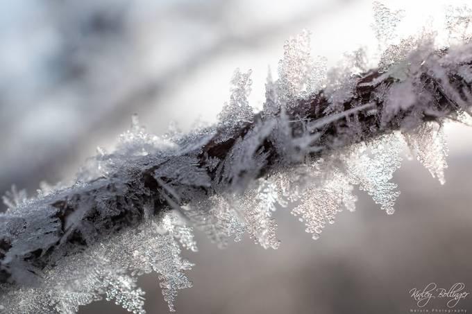 Ice and Light