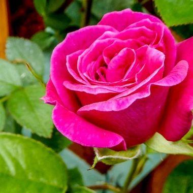 a bonny bloom