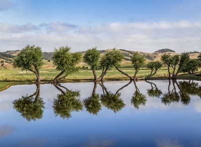 Arboreal Reflections