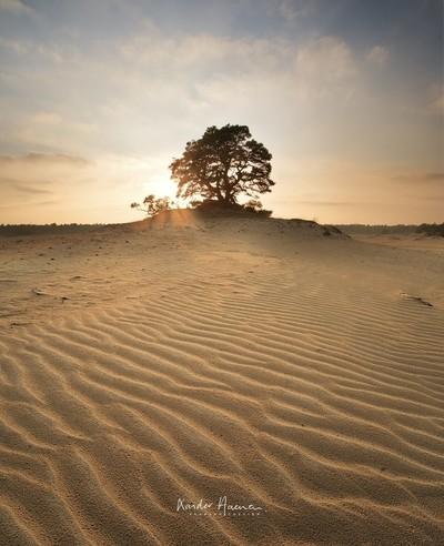 Sand Dunes in Woodland