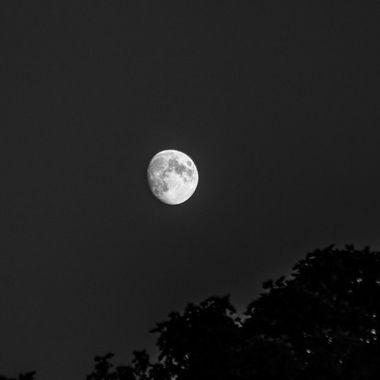 moon bw - 7423
