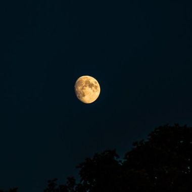 moon - 7423