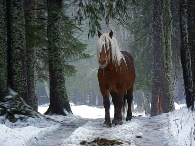 Forest Horse by dawnvandoorn - Winter Wildlife Photo Contest
