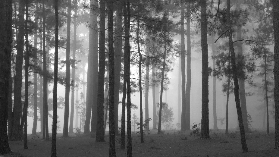 The beauty of a foggy forest